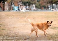 fpとわたくし:台湾わんこ。SIGMA fp + 24-70mm F2.8 DG DN Art 作例 #SIGMAfp #SIGMA - さいとうおりのおいしいとかわいい