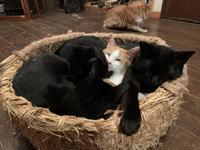 黒猫に埋もれる - りきの毎日