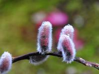 春といえば春 - monn-sann