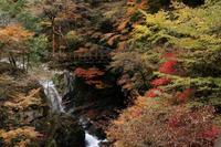 紅葉~御手洗渓谷 - katsuのヘタッピ風景