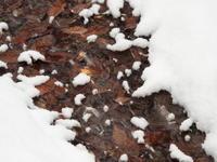 積雪約5cm、ノーマルタイヤ危険!!(2020年2月18日) - 北軽井沢スウィートグラス