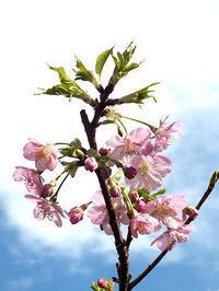 春の息吹 - しらこばとWeblog