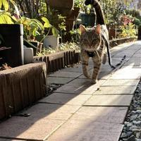 猫ブローチ3 - 「にゃん」の針しごと