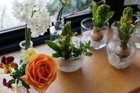 庭だより - mille fleur の花とおやつ