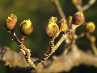 春日 - 清治の花便り