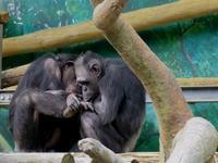 いつもと違う組み合わせ[天王寺動物園] - a diary of primates