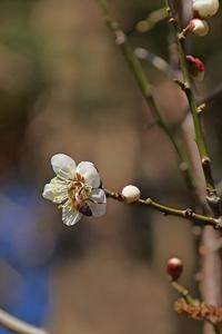 蜜を求めて2020-02-20更新 - 夕陽に魅せられて・・・