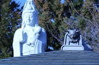 足立区扇橋大橋界隈の吉祥寺に「咲く梅」。 - 一場の写真 / 足立区リフォーム館・頑張る会社ブログ