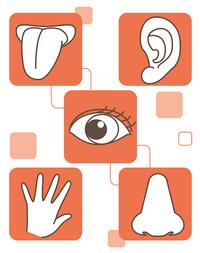 五感を使うと英語の表現力が上がります。 - Language study changes your life. -外国語学習であなたの人生を豊かに!-
