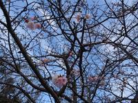 From Iwashiro to Minabe /岩代から南部へ - 熊野古道 歩きませんか? / Let's walk Kumano Kodo