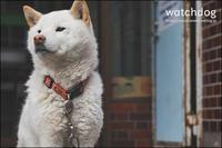 watchdog - すずちゃんのカメラ!かめら!camera!