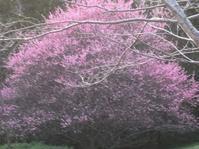 白梅紅梅満開なり - 花の自由旋律