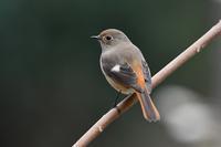 森の鳥さん② - 鳥と共に日々是好日