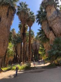 Palm Springs & OC 旅行ー2 - 北カリフォルニア日記