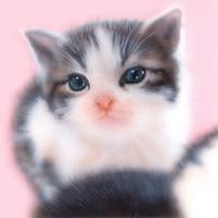 【#毎日一絵チャレンジ】#アクリル画「マンチカン(外出前のにゃんこ)」#メイキング #子猫の絵 - junya.blog(猫×犬)リアリズム絵画