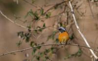 河川敷で見た鳥さん - 夫婦でバードウォッチング