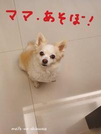 この愛しさに負けて・・・ - メイフェの幸せ&美味しいいっぱい~in 台湾