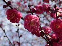 初春に一句♪ - CUBPEES