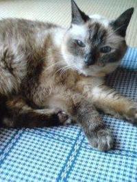 今日は猫の日☆☆☆ - 占い師 鈴木あろはのブログ
