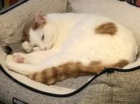猫の日です - 研究室日記 Heaven helps those who help themselves. 天は自ら助くる者を助く