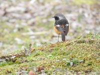 『木曽川水園の鳥達~』 - 自然風の自然風だより