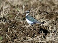 千葉県探鳥 - Bird Healing