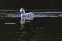 水の上の白黒パンダが首を曲げてこっちを見てる…w - Olive Drab