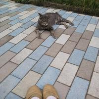 遊歩道のボス猫 - ゆきももこの猫夢日記