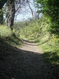 春の午後 - hibariの巣