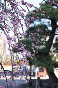 春一番が吹き荒れた東京足立区春が来ても~。 - 一場の写真 / 足立区リフォーム館・頑張る会社ブログ