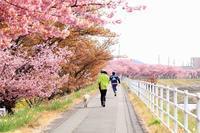 桜並木は終了 - 暮らしの中で