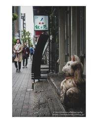 猫の日 - ♉ mototaurus photography