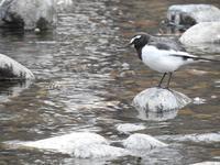 『木曽川水園の水辺の鳥達~』 - 自然風の自然風だより