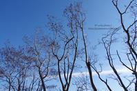 青空とサルスベリ - It's only photo 2
