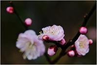 頃合い - HIGEMASA's Moody Photo