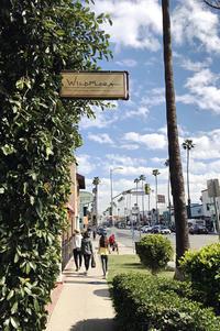 Wild Flora, Studio City* - Avenue No.8