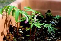 雨水霞始靆 - 紀州里山の蝶たち