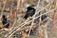 入念にお化粧 - 綺麗な野鳥たち