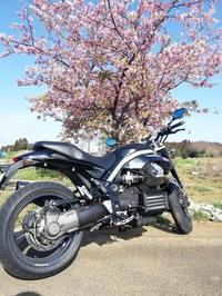 梅を見に行ったはずが・・・ - なんでバイクに乗るのでしょう?