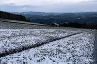 雪の朝 - toshi の ならはまほろば