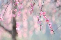 春は一気に - 心 色