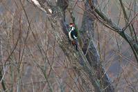 2020-033 雨上がりのアカゲラ - 近隣の野鳥を探して2