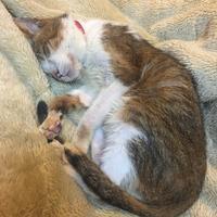 チコにお昼寝時流して良いと許可をもらった曲シリーズ #3 - COMPLEX CAT