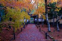 竹の寺地蔵院の紅葉 2019 - ぴんぼけふぉとぶろぐ2
