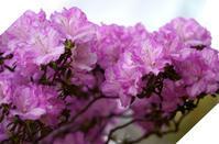 温室の花1 - お茶にしませんか2