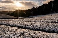 雪の朝2 - toshi の ならはまほろば