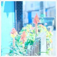 アロエの花 。°* - かめらと一緒*