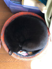 満点満足 - 愛犬家の猫日記