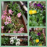 3ヶ月遅れの春の植え替え - うららフェルトライフ