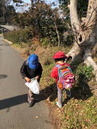 ふきのとうも花が咲き… - 茅ヶ崎藤沢の青空自主保育てぃだのふぁブログ